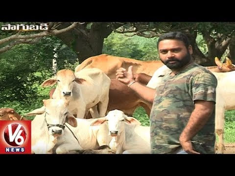 Sagubadi : Success Story Of Organic Farmer Kranthi Kiran || Medak || V6 News