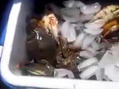 To die for crabbing 100 crabs in two hours at lynnhaven for Lynnhaven fishing pier report