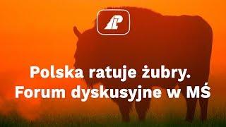 Polska ratuje żubry. Forum dyskusyjne w MŚ