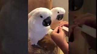 Parrots Love Manicures