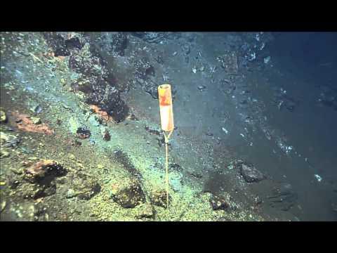 Vent Life - ROPOS Dive R1929 - Exploring Mariner