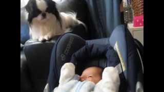 仲良し狆と赤ちゃん.