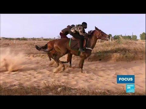 Download Sénégal : les courses hippiques, une passion qui attire les jeunes