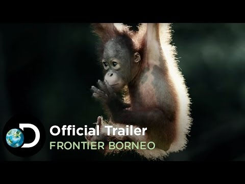 Official Trailer | Frontier Borneo