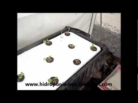 Como cultivar fresas en puerto rico