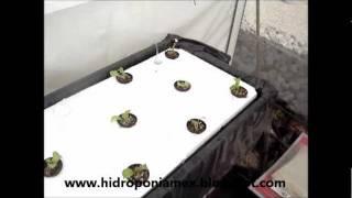 Hidroponia  ¨Raiz flotante¨ como se ha...