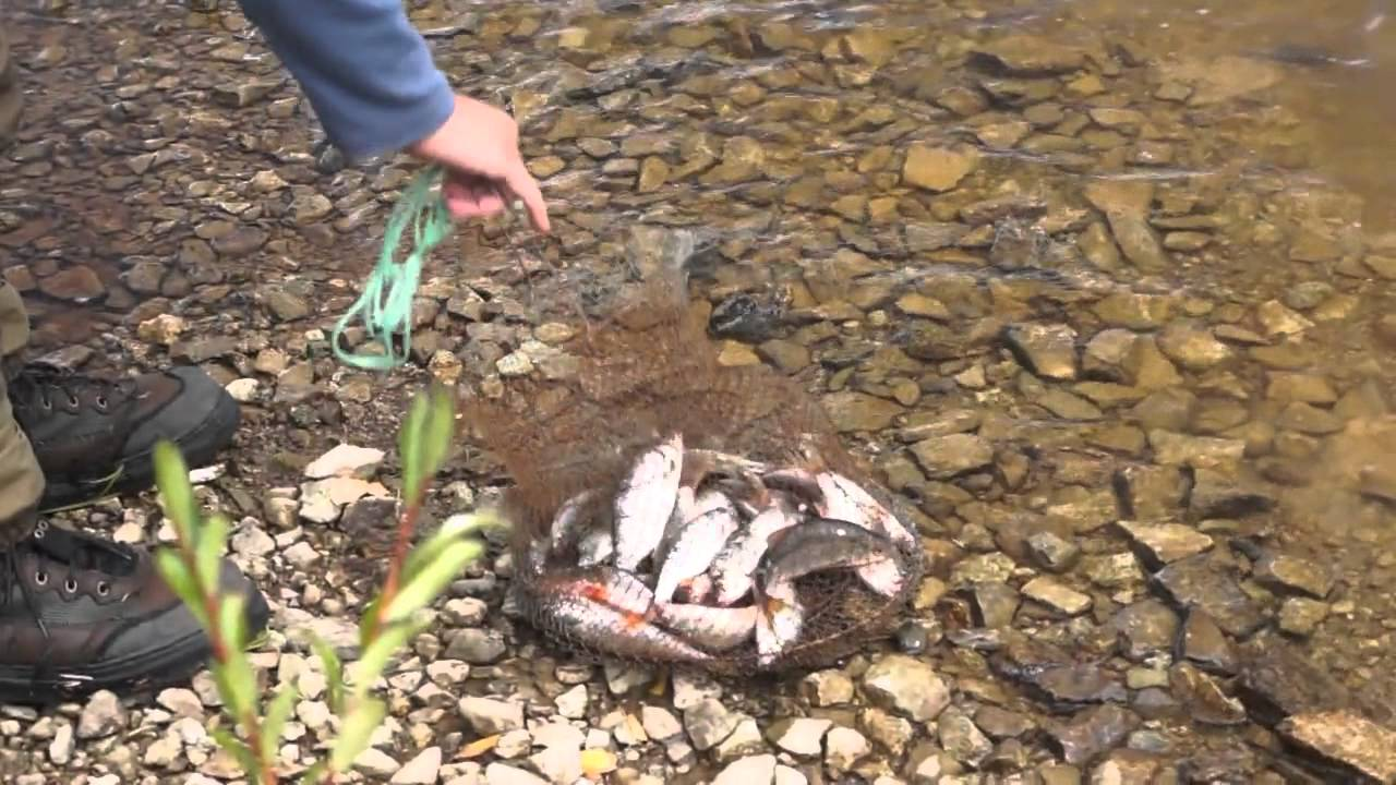 беликуль рыбалка форум