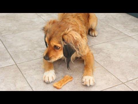 Healthy Homemade Dog Treats with Asda Money   Ad