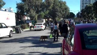 Monique seeing dog of Thanking The Monkey - Karen Dawn - Animal Acres 2nd Veggie Pride Parade