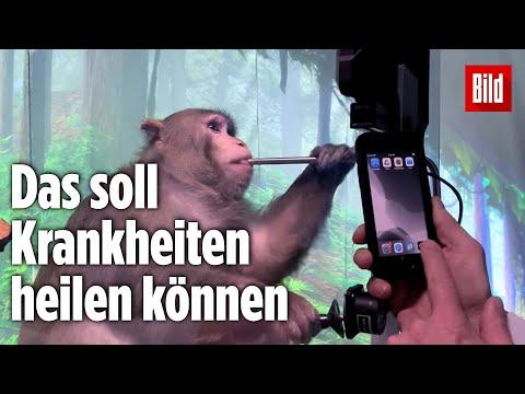 Elon Musk: Dieser Affe zockt Computerspiele per Gedankensteuerung