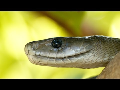 Black Mamba vs Dead Lion 04, Time Lapse Speed x2 - YouTube