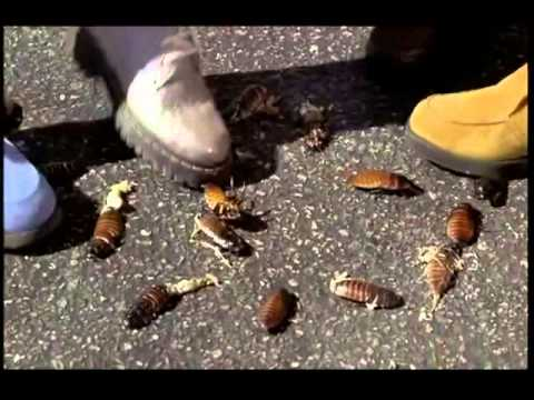 Guys Crushing Bugs