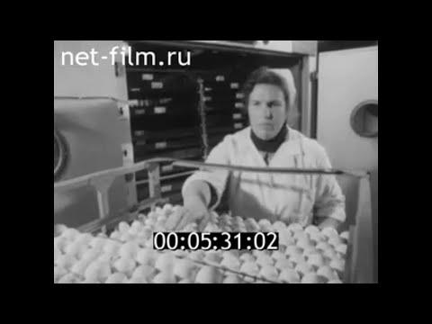 1976г. колхоз Россия Аткарский район Саратовская обл