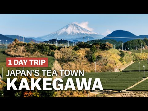 Exploring Japan's Tea Town, Kakegawa in Shizuoka | japan-guide.com
