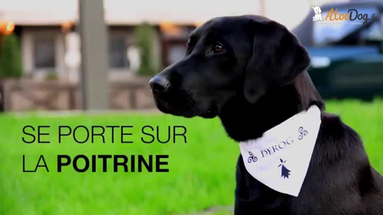 62de65132794 Bandana chien corse breizh bretagne bretons hermine. Matthieu AtooDog