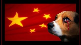 YULIN DOG MEAT FESTIVAL - CHINESES MACABROS!