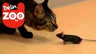 Katz und Maus werden beste Freunde!