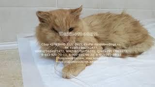 Спасение кота Дождика и еще пяти кошек в приюте  Подозрение на Лейкоз и Коронавирус.(, 2017-11-25T02:14:52.000Z)