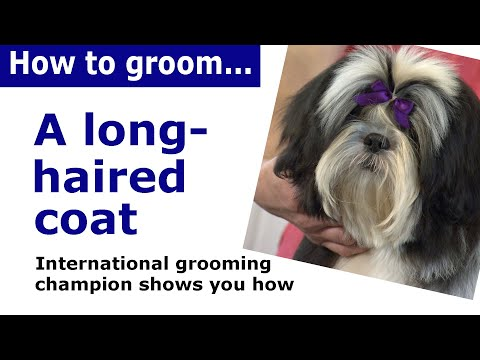 How To Groom A Long Haired Dog Dog Grooming Demonstration Youtube