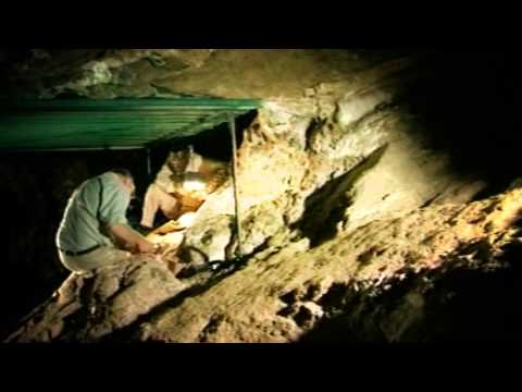 An Introduction to the Australopithecus sediba