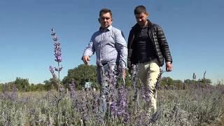 Тимак Агро - технологични решения при отглеждане на лавандула