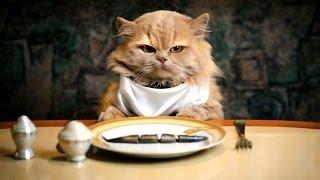 Коты и собаки сражаются за корм - лучшие моменты * Battle of mat - de beste øyeblikkene