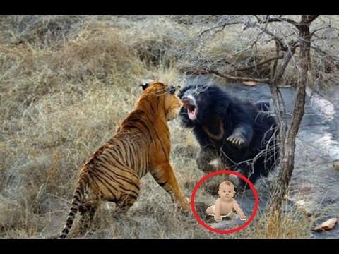 Вопрос: Среди каких животных наблюдается взаимовыручка?