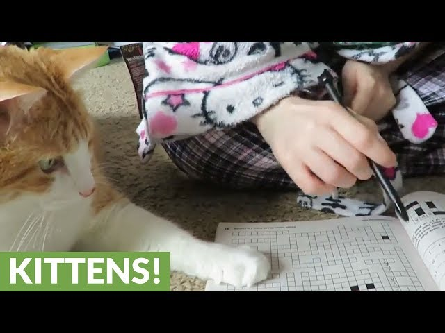 """Cat """"helps"""" owner solve word puzzle"""