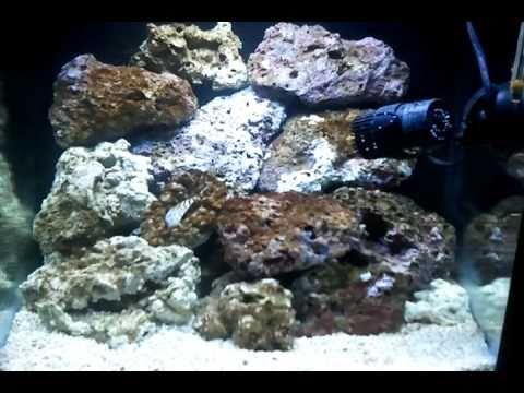 Janvier 2011 aquarium nano recifal 60l t youtube for Aquarium recifal nano