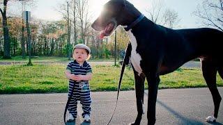 Дети выгуливают собак или наоборот - Funny dogs and kids - приколы