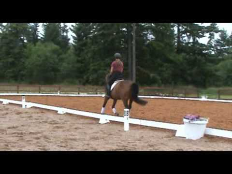 Paloma -talented Young Horse That Is Quiet