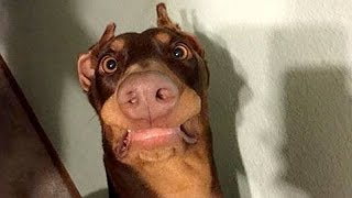 Funny Dogs Make You Happy and Smile - Funny Dogs Compilation 2017