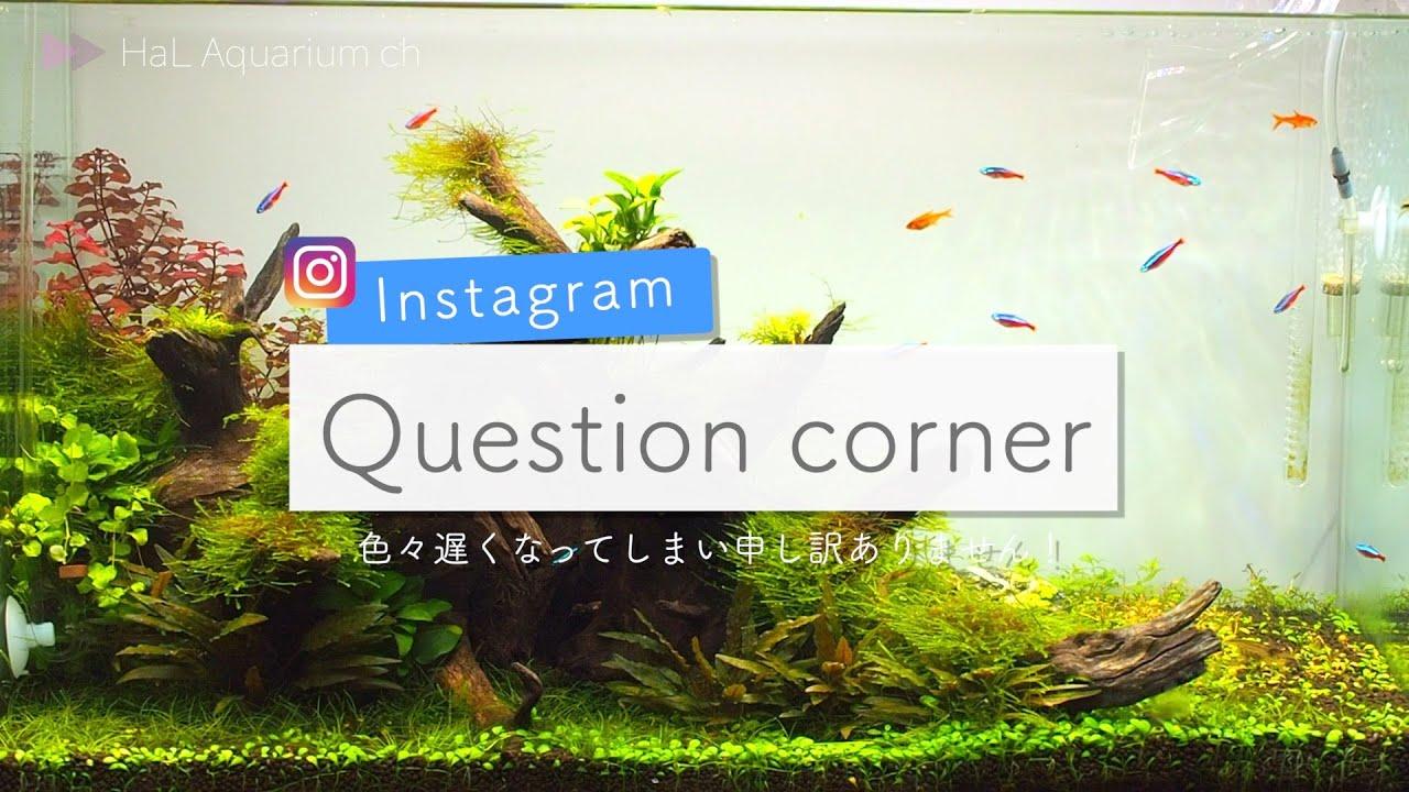 """【アクアリウム】#36""""Instagram質問コーナーお答え編Part1""""【初心者】"""