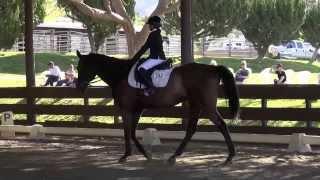 Prince Albert & Nina Mesiwala - Training Level Test 1 - Spring Schooling Show 2014