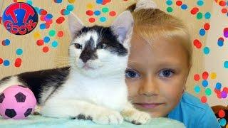 Наши Кошки и Коты Видео для Детей Котенок Смешные Животные для Детей Funny Cats and Kittens