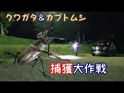 車中泊カブトムシ&クワガタ捕獲大作戦