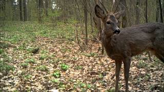 Obserwator 36: Leśne życie / Life in the forest