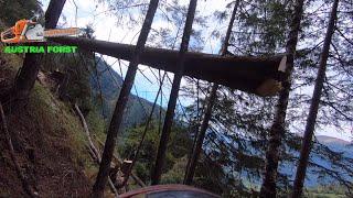 Holzfällen unter schwierigen bedingungen