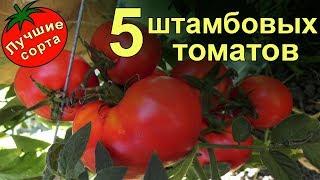 Штамбовые урожайные томаты (лучшие сорта томатов)