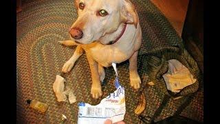 The Best of Denver the Guilty Dog Volume I