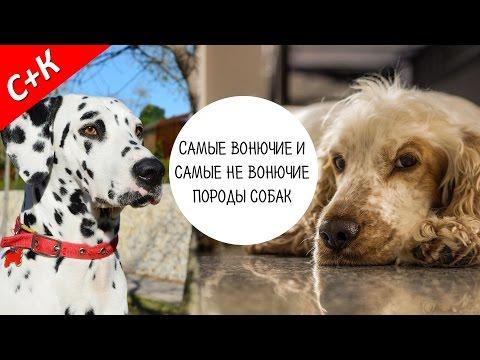 Гипоаллергенные собаки или собаки для аллергиков Мир