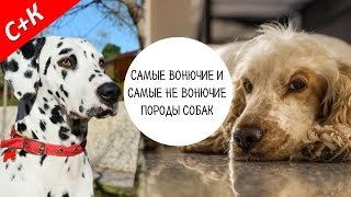 Породы собак с запахом и без запаха.