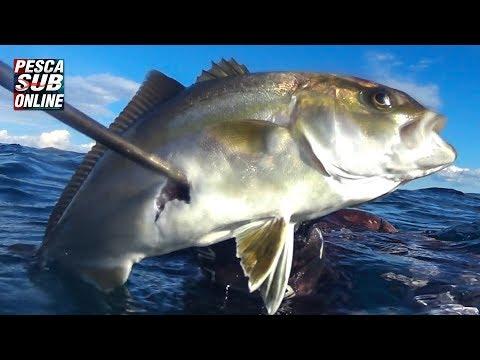 PESCA SUB : Bassofondo – Pesca in apnea invernale – Aspetto ricciola – Pesca subacquea GENNAIO 2019