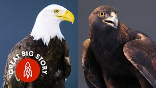 Everything You Didn't Know About Eagles