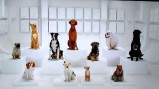 Dogs barking Star Wars
