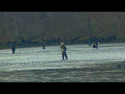 Catching Trout With A Spinning Rod Surrounded By Fly Fishermen - Yikes!
