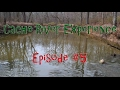 Cache River Experience in Southern Illinois [Episode #5]