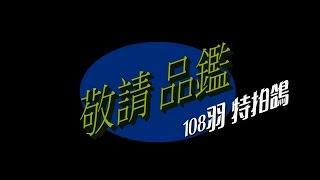 王孜益(螺絲王)~感恩回饋108羽特拍鴿寫真呈現!