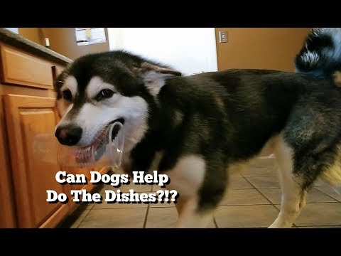 This Is What Happens When Your DOG Helps Do The Dishes.....lol!!!!!!!!