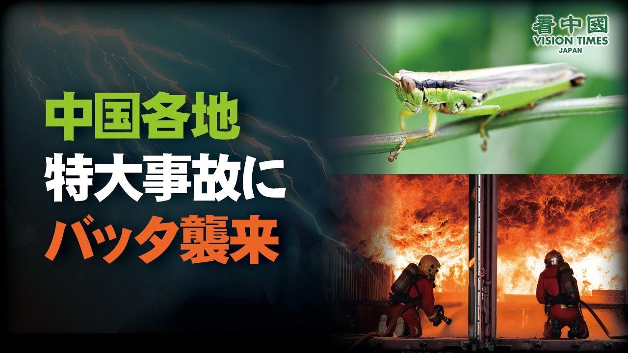 中国、吉林省・黒龍江省でイナゴ発生 食糧危機の恐れ